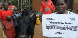 Una mucca per la vita - progetto di sviluppo in Uganda