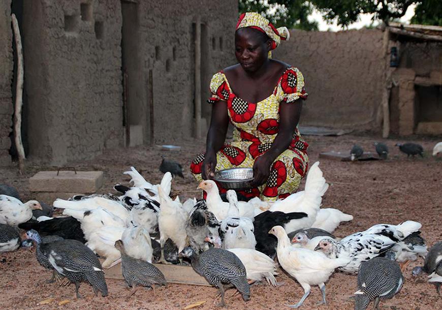 Un menage, un poulailler (Burkina Faso)